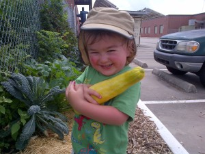 Harvesting veggies from a school garden